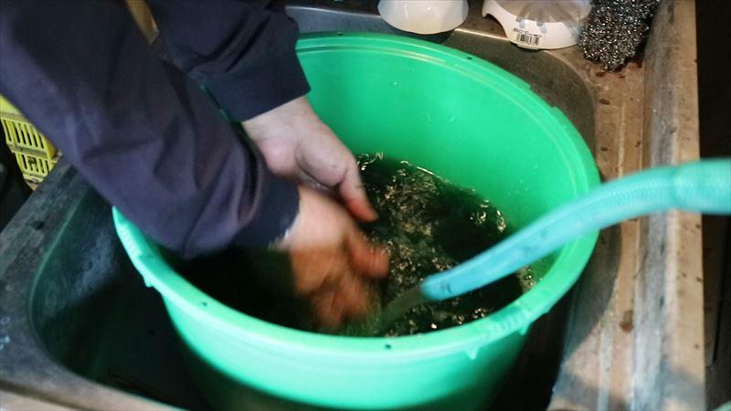 染色したハンカチを洗う